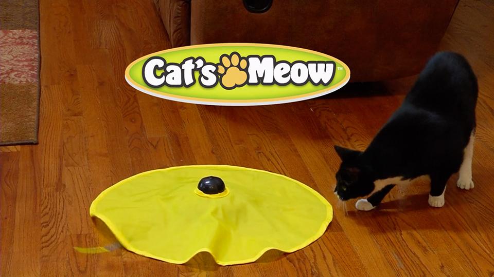 pets-cats-meow