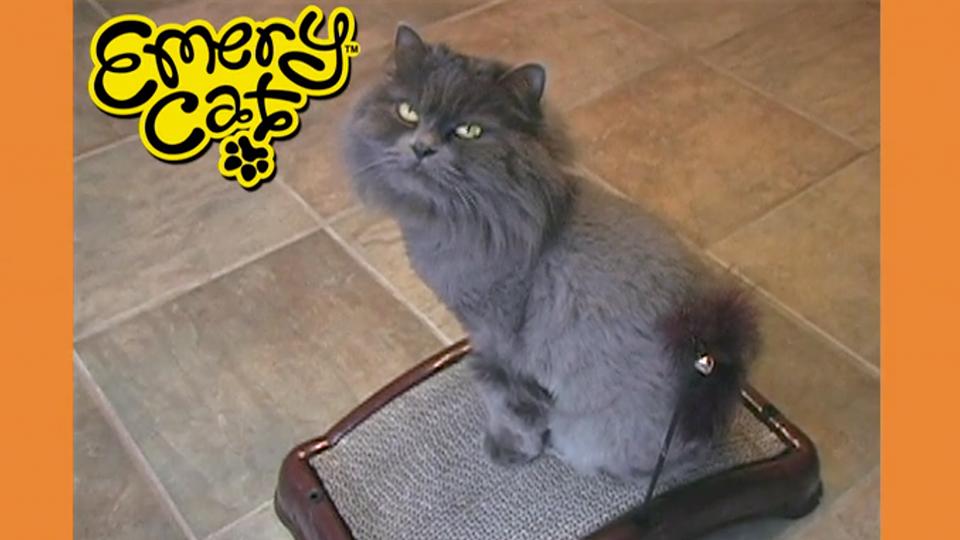 pets-emery-cat