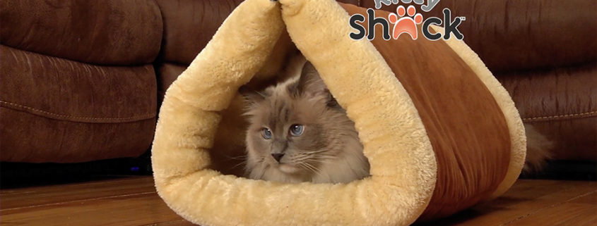 Kitty Shack | Concepts TV