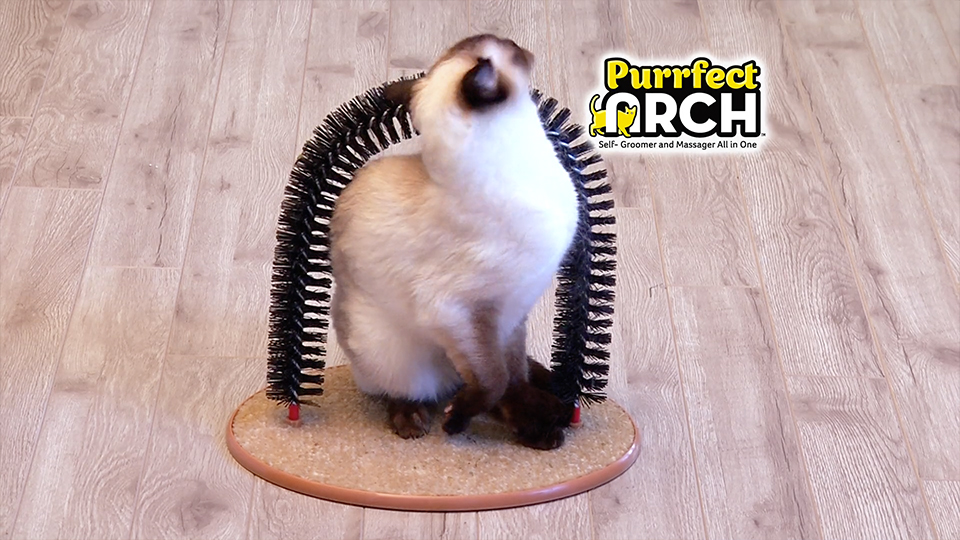 pets-purrfect-arch